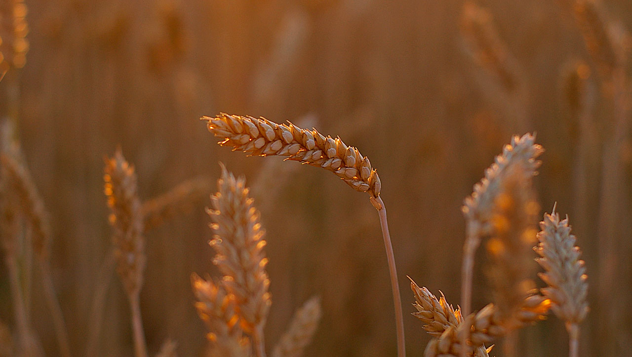Как делают удобрение Гумат, и как его лучше использовать